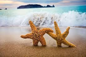 Two starfish interlocking